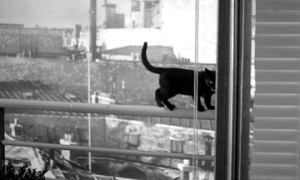 black cat in Elevator to the Gallows